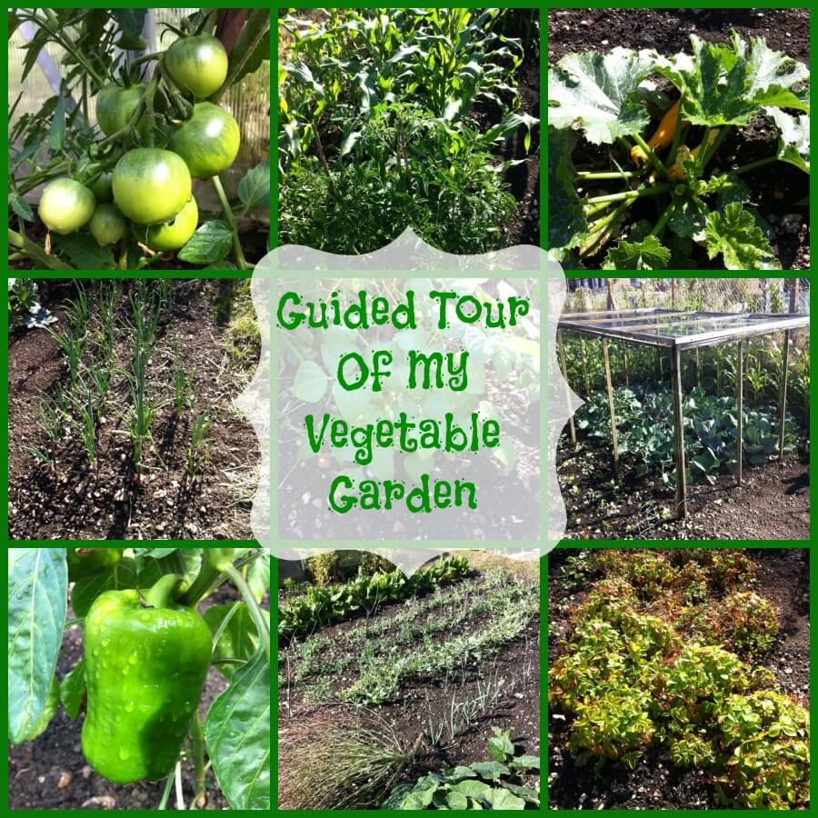 vegetable-garden-tour