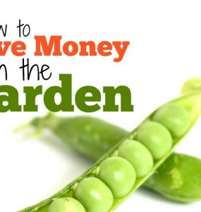 How to save money in the garden when you're growing your own fruits and vegetables. Top money-saving tips every gardener needs.