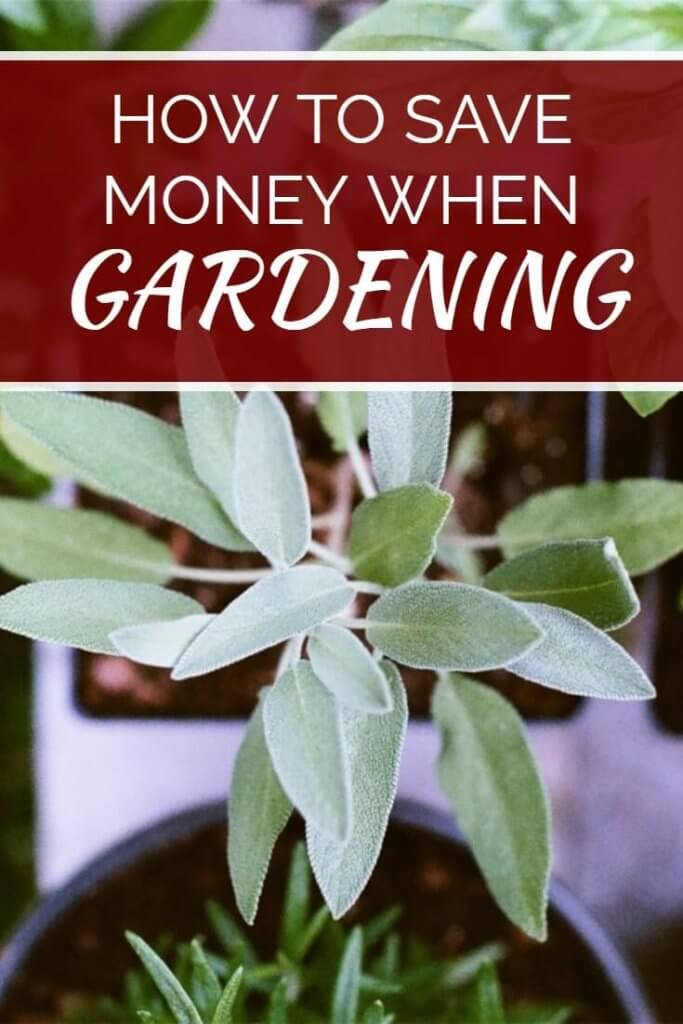 Ways to save money in the garden when growing your own vegetables - Money saving tips in gardening ...